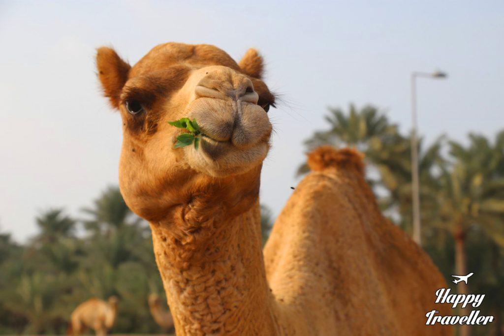 bahrain-happy-traveller-9
