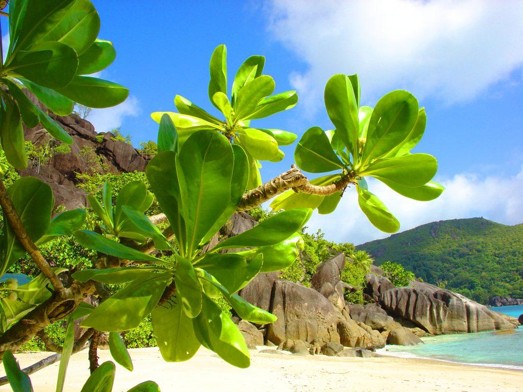 seychelles-happy-traveller-1
