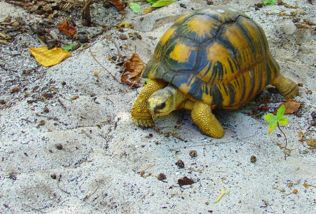 seychelles-happy-traveller7