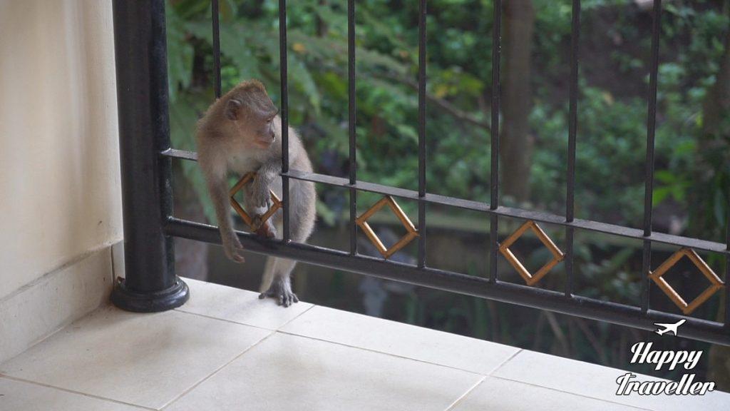 champlung-sari-hotel-ubud-bali-indonesia-happy-traveller