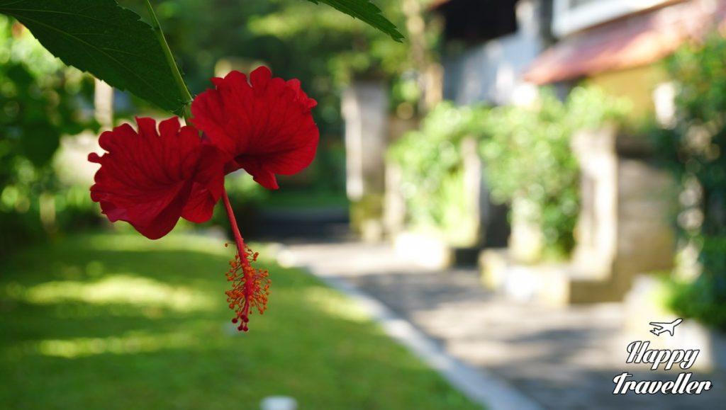 champlung-sari-hotel-ubud-bali-indonesia-happy-traveller-2