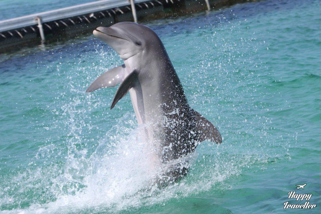 agios dominikos delfinia