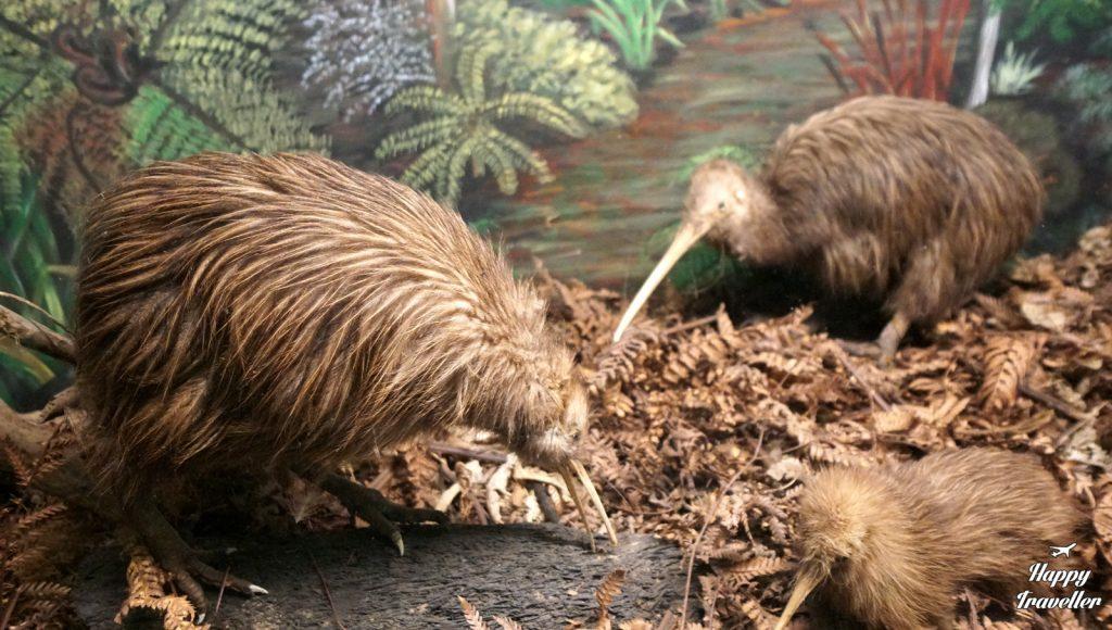 Kiwi House New Zealand